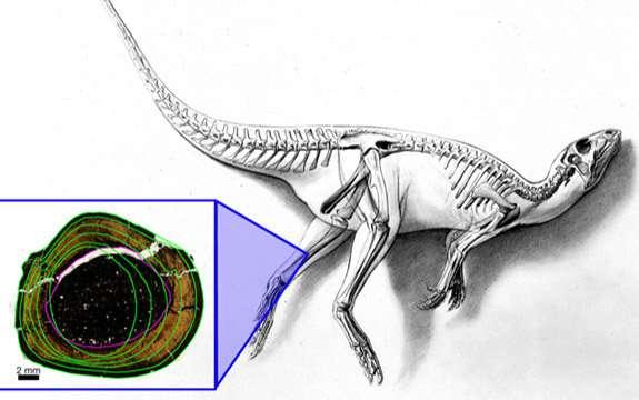 Shedding light on Australia's polar dinosaurs