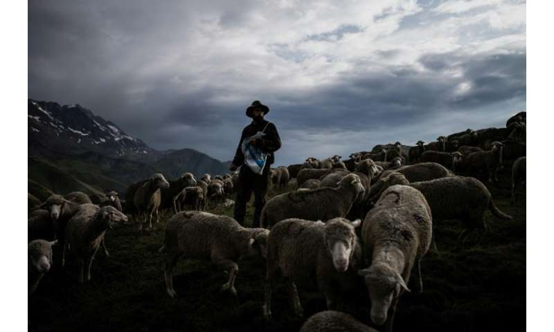 Shepherd Gaetan Meme has just finished his third season of transhumance in the French Alps, or the tradition of guiding livestoc