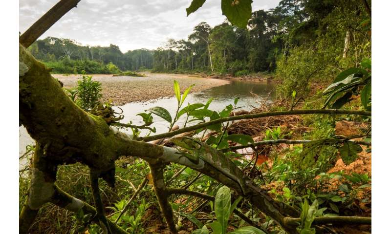 Shocking study shows one third of world's protected areas degraded by human activities