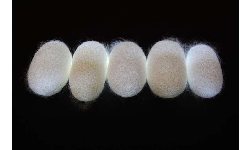 Silk fibers could be high-tech 'natural metamaterials'