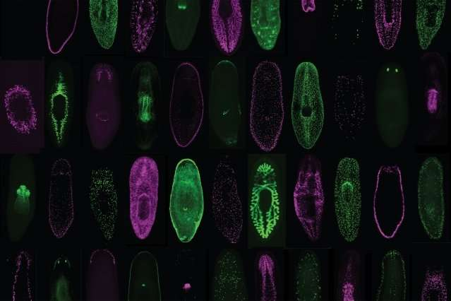 Single-cell database to propel biological studies
