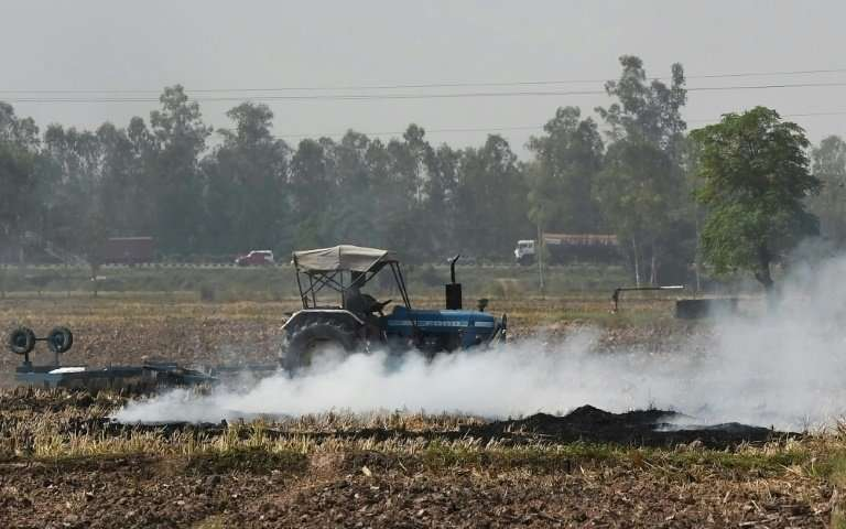 Slash-and-burn farming is illegal but deterrents, such as fines of up to $200 for farmers flouting the law, appear to have limit