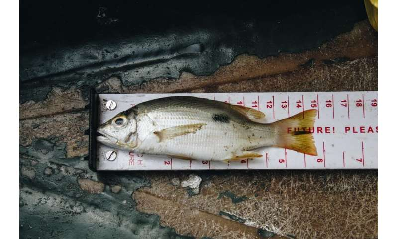 Small-scale fisheries are throwing away fish that could feed those inpoverty