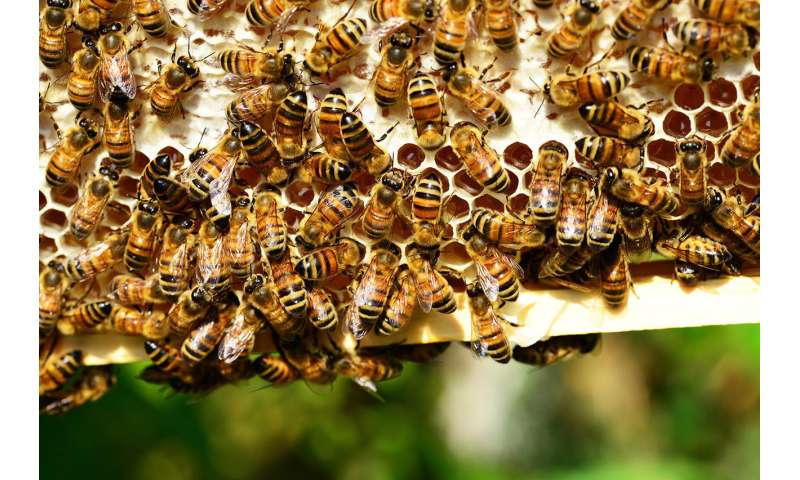 Smart beehives and heat treatments could protect bees from decline
