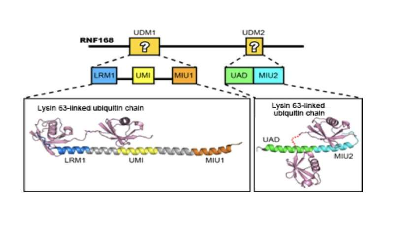 Snapshot of DNA repair