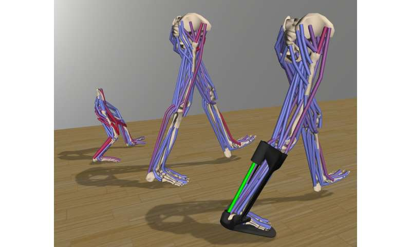 Software recreates complex movements for medical, rehabilitation, and basic research
