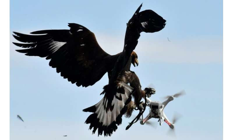 Some airports have looked at using birds of prey to tackle drones