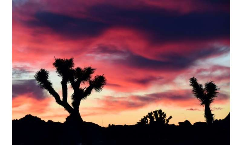 Sprawling Joshua Tree National Park in California is getting a big hand from shutdown volunteers
