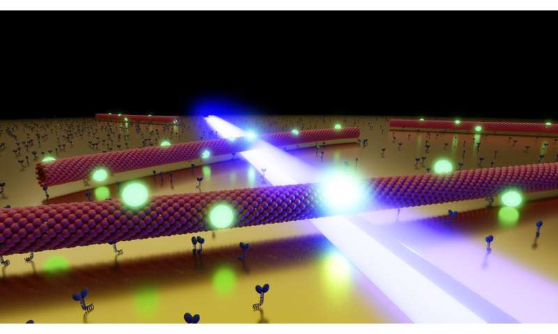 Stagediving with biomolecules improves optical microscopy
