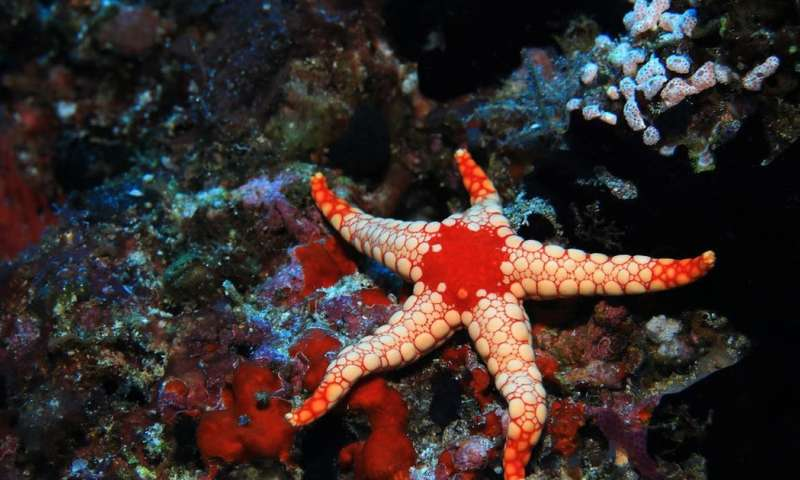 Starfish can see in the dark (among other amazing abilities)