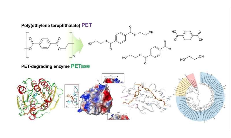 Structural insight into the molecular mechanism of PET degradation