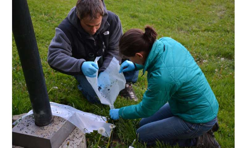 Study bolsters bats' reputation as mosquito devourers