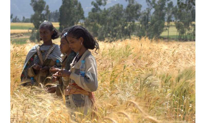 Study in Ethiopia links healthy soils to more nutritious cereals