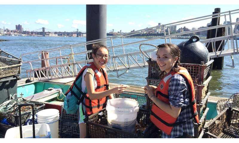 Study offers pearls of wisdom in contested New York oyster restoration