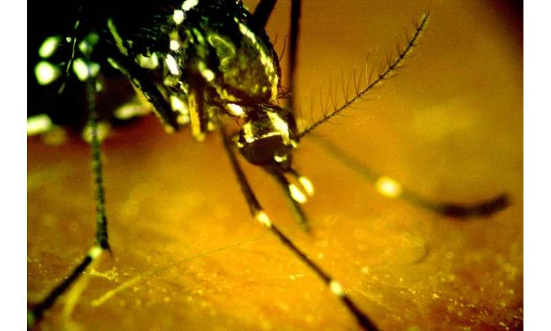 Study shows blood test can differentiate between Zika and dengue