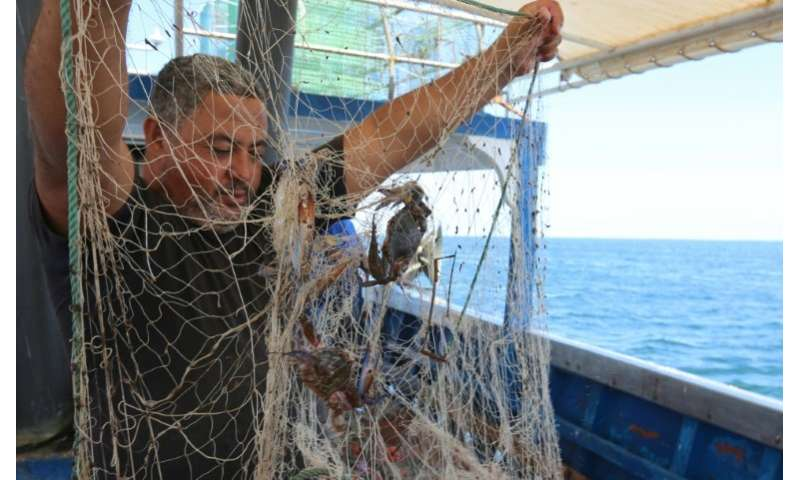 """Such was the havoc the blue crab brought to Tunisian fishermen's catches, they nicknamed it """"Daesh"""" after Islamic Stat"""