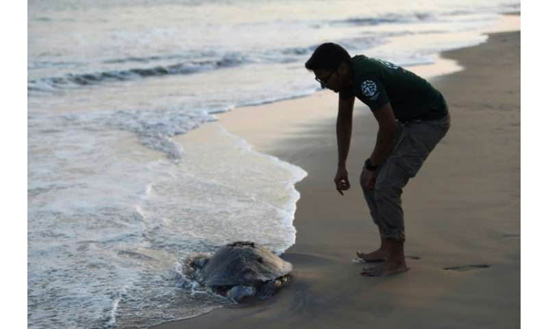 Sumanth Madhav, campaign manager for wildlife for animal welfare charity Humane Society International (HSI), looks at a dead Oli