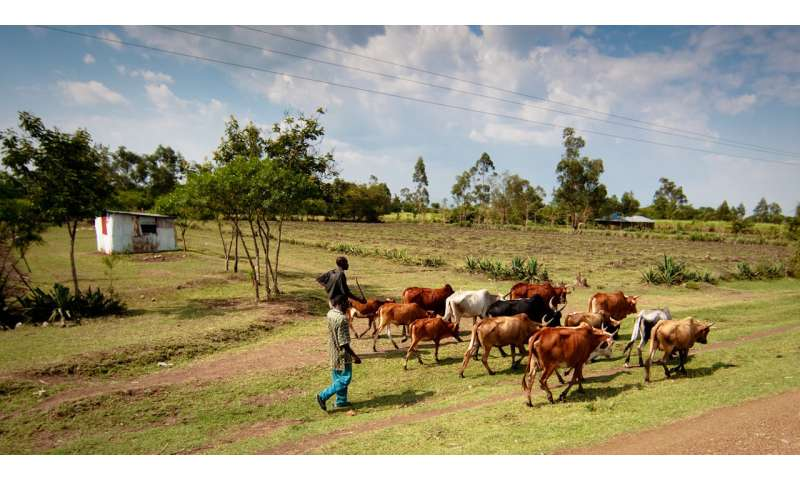 Surveillance of livestock could detect rift valley fever disease before human transmission