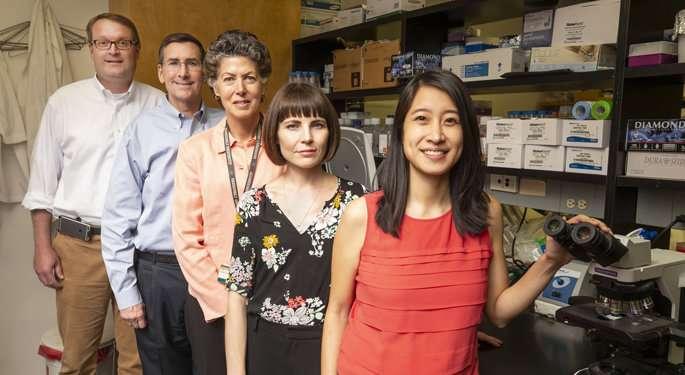 Team explores diabetes drug's ability to treat RSVinfection