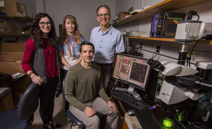 Team seeks to create genetic map of worm's nervous system