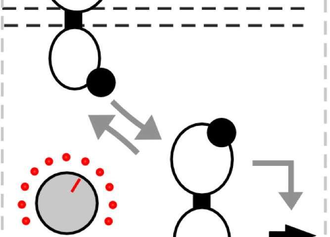 Technique to fine-tune two-component biological sensors