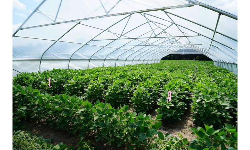 Tennessee scientist works to increase crops' water saving potential
