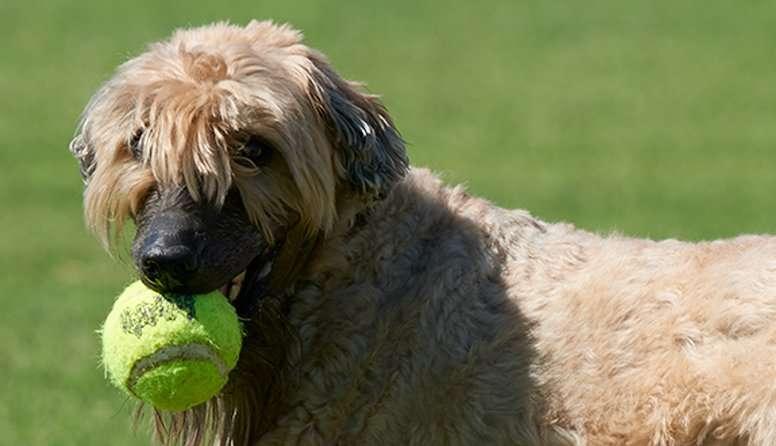 TGen-led canine melanoma study identifies genetic basis of disease; potential drug targets