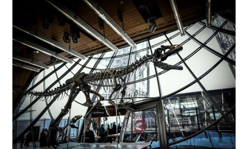 The 150-million-year-old skeleton, which is 70 percent intact, was snapped up by an unnamed French art collector, who promised t