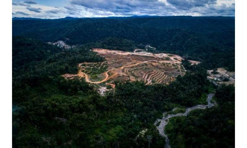The $1.6 billion dam project will cut through the heart of the critically endangered orangutan's habitat