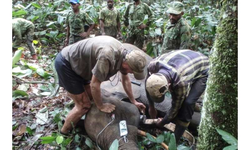 The authorities are waging virtual war on the lucrative ivory trade and the poachers who come from neighbouring Cameroon and Con
