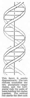 The convoluted history of the double-helix