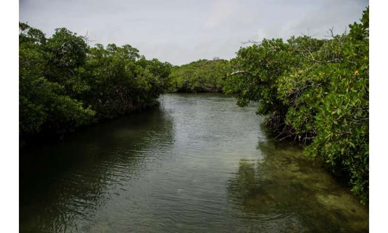 The mangroves help protect the reef and serve as a breeding ground for many of the hundreds of fish species that inhabit the are