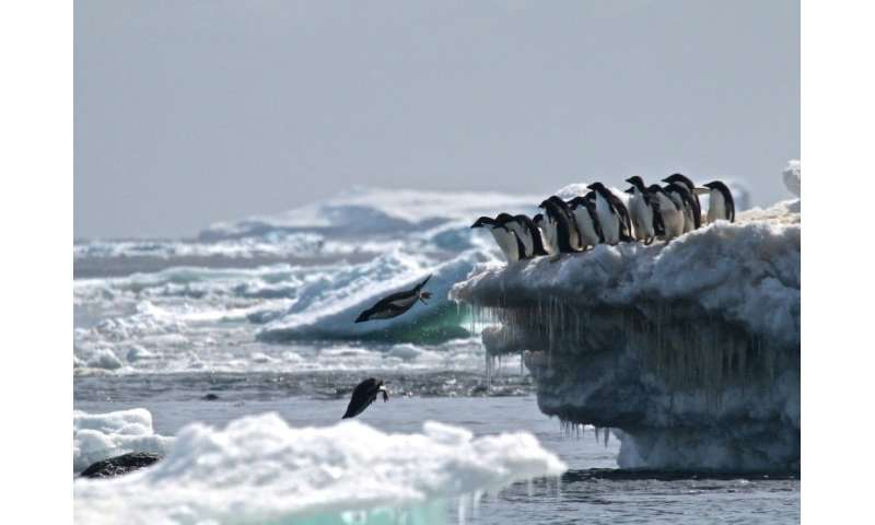 The proposed sanctuary would ban fishing in a vast area in the Weddell sea, protecting key species including Adelie penguins