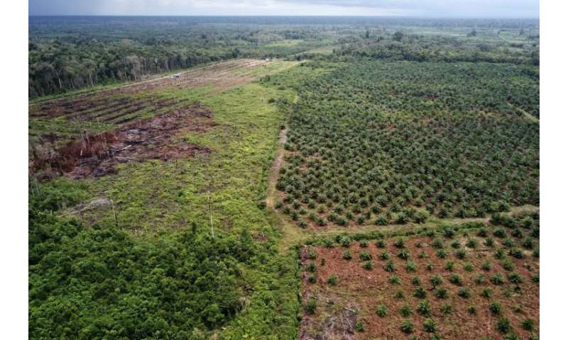 The rapid growth  of palm oil plantations has been blamed for the destruction of tropical forests that are home to many endanger