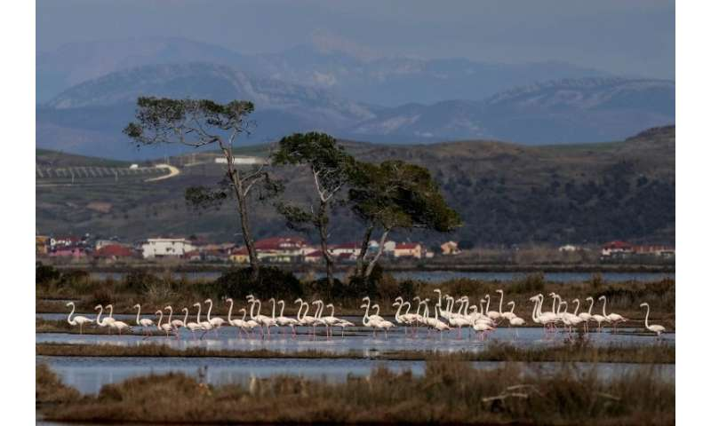 There are 200 species of birds which inhabit or visit the lagoon, including at least 1,500 greater flamingoes