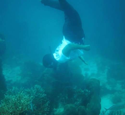 The reefs are popular with divers, and a top tourist attraction in Belize
