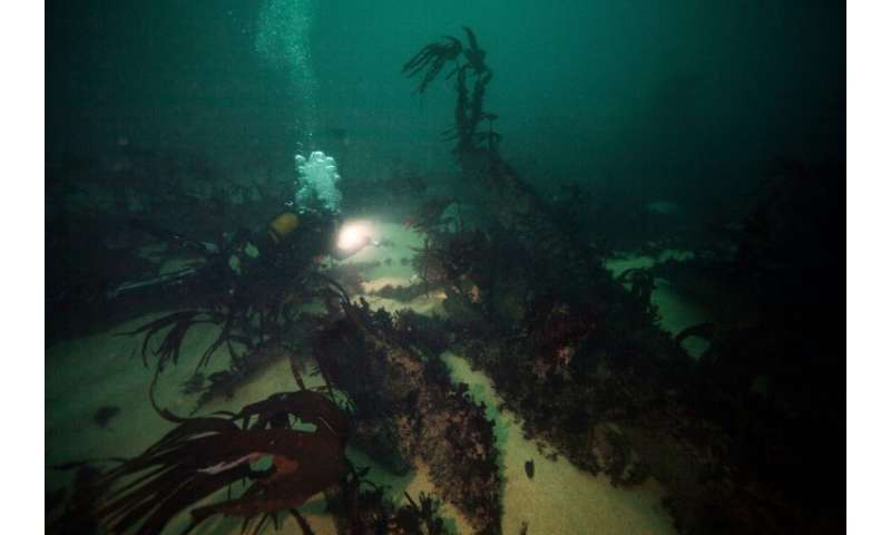 The seaweed-covered hull of the Amoco Cadiz is slowly sinking into the sea bed