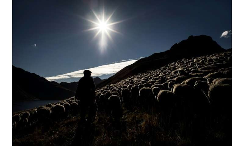 The solitary life of a shepherd still attracts plenty of youngsters but few stay on beyond a couple of seasons