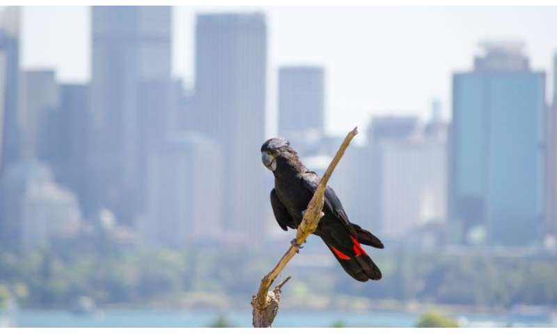 The threatened species in our urban jungle