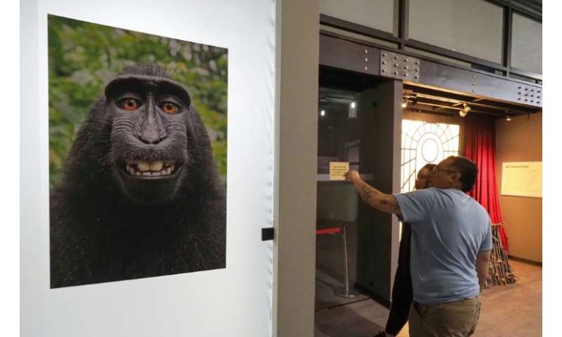The viral selfie taken by a macaque monkey using the smart phone of nature photographer David J. Slater and which became the sub