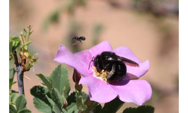 Think about bees say researchers as Grand-Staircase Escalante National Monument Shrinks