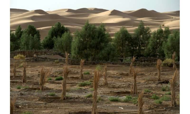 This 2016 file photo shows a palm field suffering from desertification near Morocco's southeastern oasis town of Erfoud
