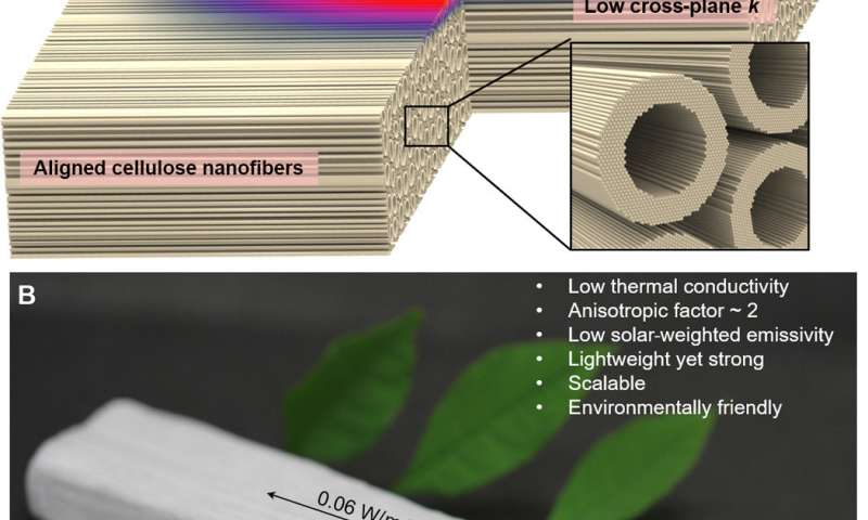 This is 'nanowood,' an invention that could reduce humanity's carbon footprint