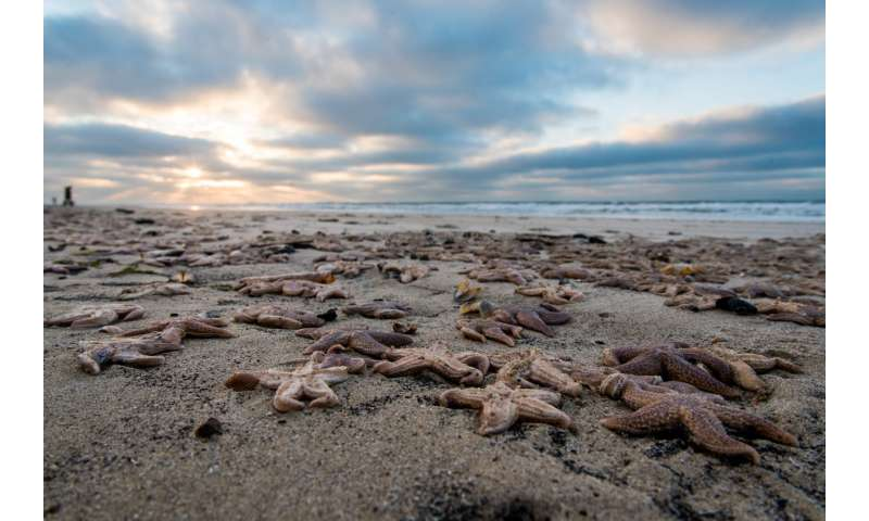 Thousands of starfish have washed up dead after the 'Beast from the East' – here's why