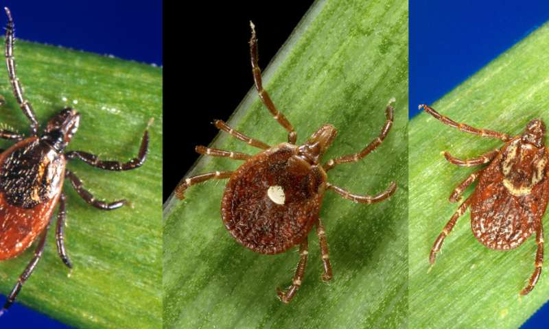 Tick bite protection: New CDC study adds to the promise of permethrin-treated clothing