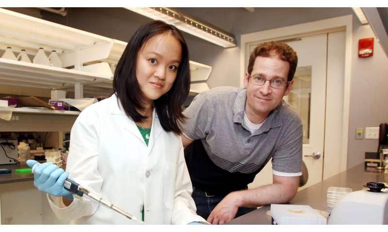 Timing is key for bacteria surviving antibiotics