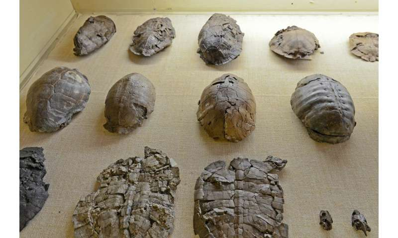 Tortoise evolution: How did they become so big?
