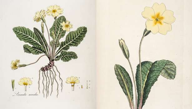 Transformed: the plant whose sex life fascinated Charles Darwin