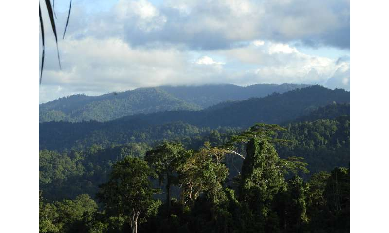 Trees' enemies help tropical forests maintain their biodiversity