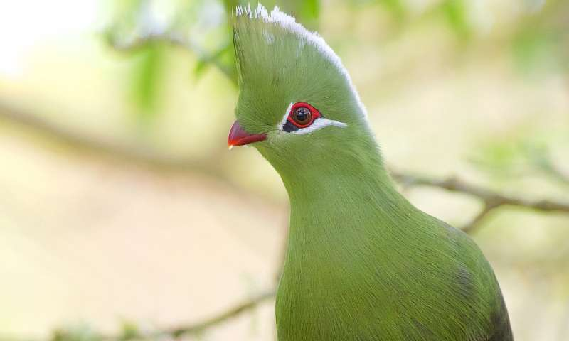 Tropical 'banana eater' birds lived in North America 52 million years ago